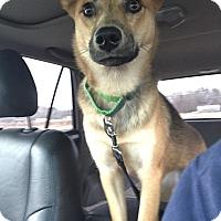 Adopt A Pet :: Lexi - Lebanon, CT