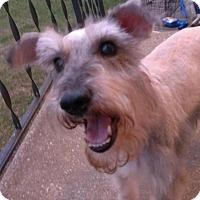 Adopt A Pet :: Artie-News! - Laurel, MD