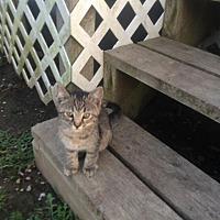 Adopt A Pet :: Ellie - Clarkson, KY