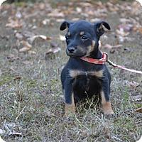 Adopt A Pet :: Marnie - Charlemont, MA