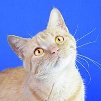 Adopt A Pet :: Reba - Carencro, LA