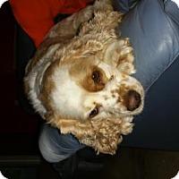 Adopt A Pet :: Freckles - San Antonio, TX