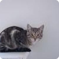 Adopt A Pet :: Finn - Ashland, OH