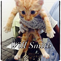 Adopt A Pet :: Will Smith - Dillon, SC