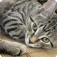Adopt A Pet :: Dalai Lama - Medina, OH