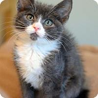 Adopt A Pet :: Lucy - Potomac, MD