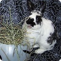 Adopt A Pet :: Paxton - Alexandria, VA