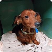 Adopt A Pet :: MILO - Lubbock, TX