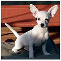 Adopt A Pet :: Bianca - Hazlet, NJ