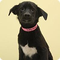 Adopt A Pet :: Annabeth - Waldorf, MD