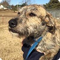 Adopt A Pet :: Dezmund - Hagerstown, MD
