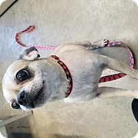 Adopt A Pet :: La-La - Knoxville, IA