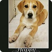 Adopt A Pet :: Rico-pending adoption - Manchester, CT