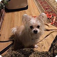 Adopt A Pet :: Tipper - Kansas City, MO