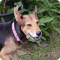 Adopt A Pet :: Shasta - Calgary, AB