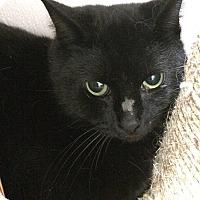 Adopt A Pet :: Rudder - Loudon, TN