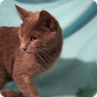 Adopt A Pet :: Aurora - Spring Valley, NY