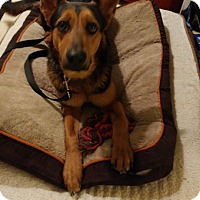 Adopt A Pet :: Capo - Quincy, IN