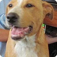 Adopt A Pet :: Eli - Greeley, CO