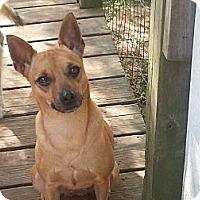Adopt A Pet :: Whoobie - Houston, TX