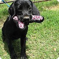 Adopt A Pet :: Yuma - Braintree, MA