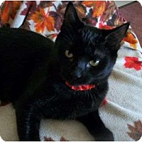 Adopt A Pet :: Bounder - Spencer, NY