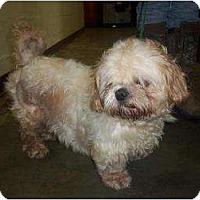 Adopt A Pet :: Noodle - Richmond, VA