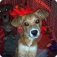 Adopt A Pet :: Sissy - Morgantown, WV