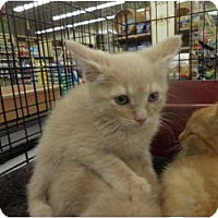 Adopt A Pet :: Thomas - Warren, MI