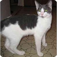 Adopt A Pet :: Bonnie (KL) - Little Falls, NJ
