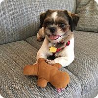 Adopt A Pet :: Sam - Buena Park, CA