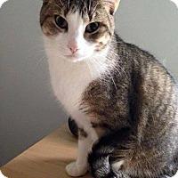 Adopt A Pet :: Manny - Hamilton, ON