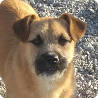 Adopt A Pet :: Paddington - Harrisonburg, VA
