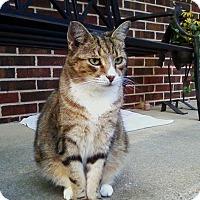 Adopt A Pet :: Floyd - Waldorf, MD