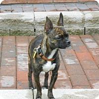 Adopt A Pet :: Gerdie 3334 - Toronto, ON
