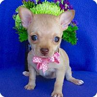 Adopt A Pet :: Hailey - Irvine, CA