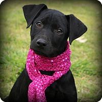 Adopt A Pet :: Mango~ meet me! - Glastonbury, CT