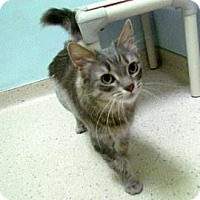 Adopt A Pet :: Mohawk - Janesville, WI