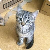 Adopt A Pet :: Izzy - Roanoke, VA