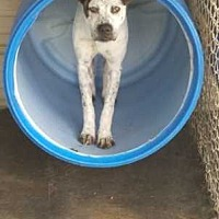 Adopt A Pet :: Robin 16-587 - Swainsboro, GA