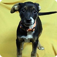 Adopt A Pet :: NALA - Westminster, CO