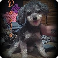 Adopt A Pet :: Paula - Denver, NC