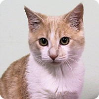 Adopt A Pet :: Dougal - Murphysboro, IL