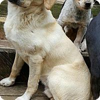 Adopt A Pet :: Cecil ADORES kids - Baileyton, AL