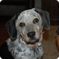 Adopt A Pet :: Skyla - Sawyer, ND