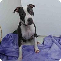 Adopt A Pet :: ZOIE - Oroville, CA