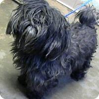 Adopt A Pet :: Arlyne - Adopted - Decatur, GA