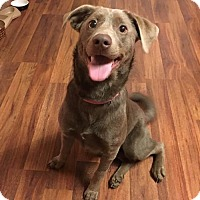 Adopt A Pet :: Ziva - Wilmington, DE