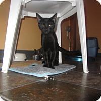 Adopt A Pet :: Wizard - Ridgway, CO