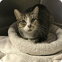 Adopt A Pet :: Allen 10 - Barrington Hills, IL